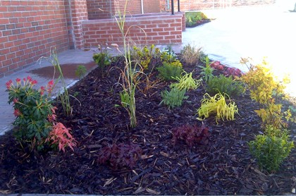 Small borders to office front - Cheshire